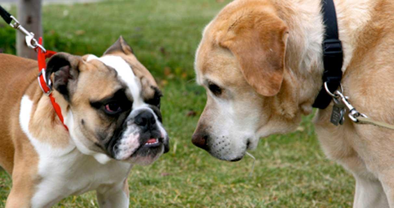 gestire-incontro-cani-in-passeggiata