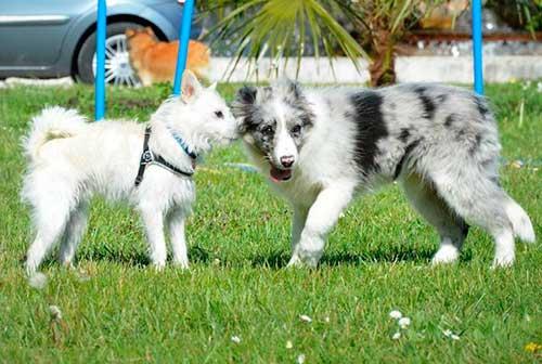 puppy-class-centro-cinofilo-treviso-5