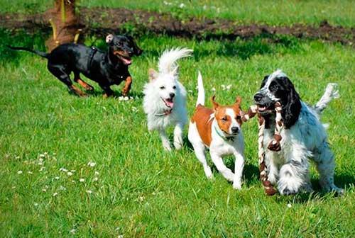 puppy-class-centro-cinofilo-treviso