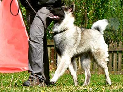 educazione-cani-base