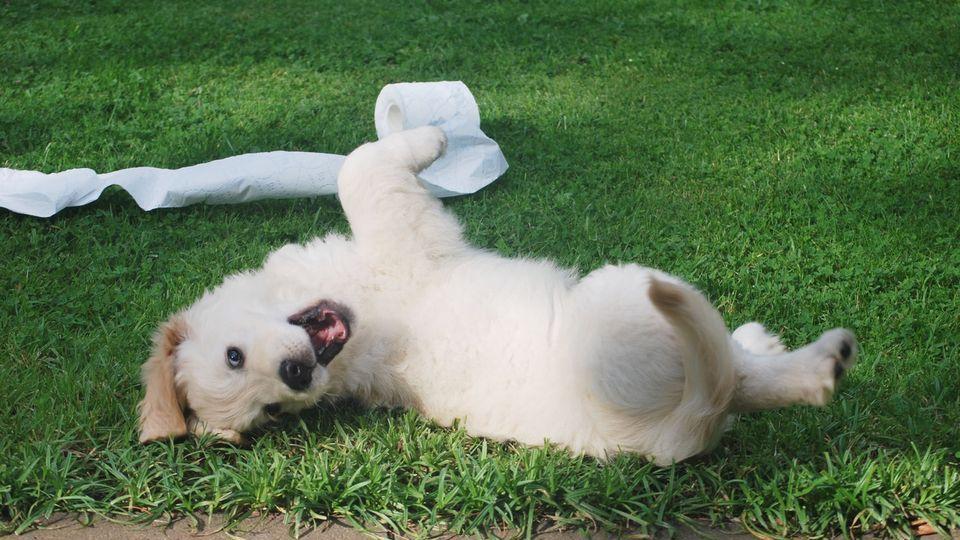tappetini-igienici-per-cuccioli