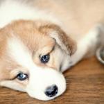 Alimentazione del cane: i disturbi comportamentali più frequenti