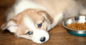 alimentazione-del-cane-disturbi-frequenti