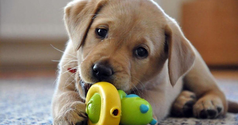 come-si-gioca-con-un-cucciolo-di-cane