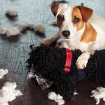 L'arrivo del cucciolo: prevenire è meglio che rieducare!