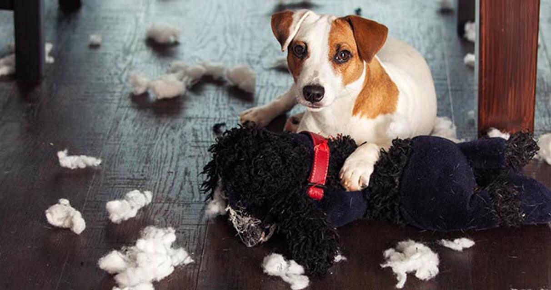 educare-cucciolo-di-cane