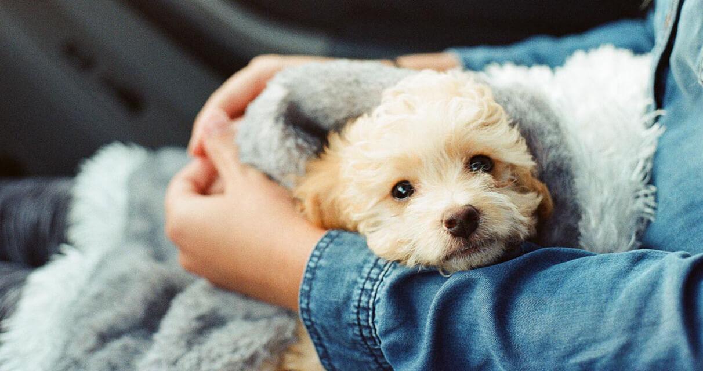 nuovo-cucciolo-di-cane-a-casa