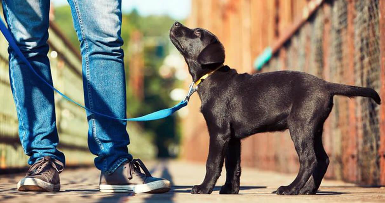 regole-gerarchiche-cane
